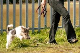 Heel Puppy, Heel! Good Puppy!