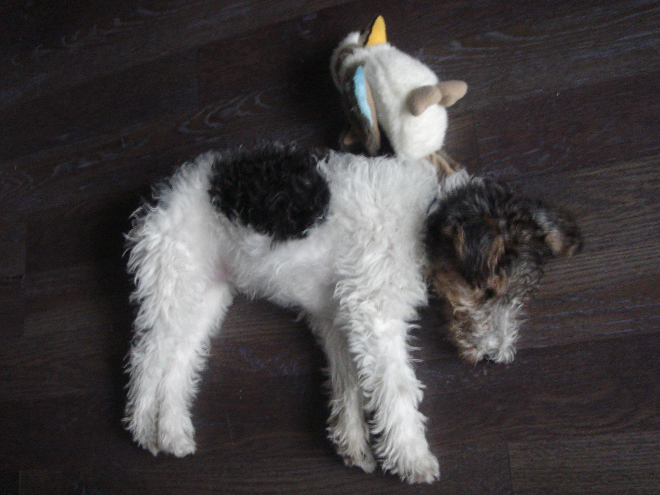 Puppy Toys | Fox Terrier About Town
