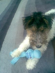 Dashwood first day at home with his first chewing toy