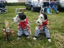 ""\""""Onions"""" Fun section of the British Wire Fox Terrier Association site""270|202|?|en|2|c459167bca333e551d7464a77d055d81|False|UNLIKELY|0.29762107133865356